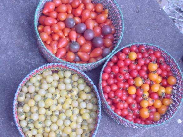 Cherry tomatoes 2009