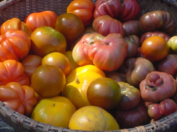 Mixed tomatoes 2