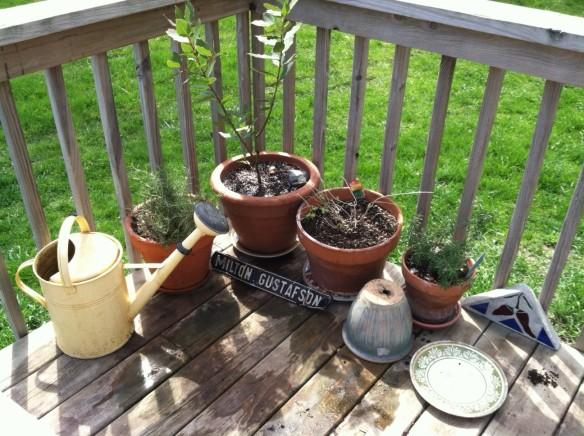 Houseplants become deck plants in the summer.