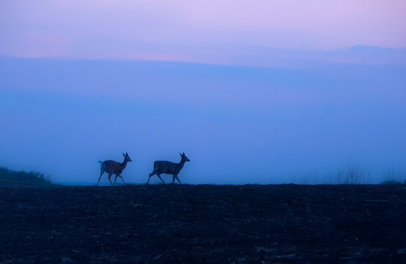 I'm pleased with my image of two deer at dusk, although this isn't the picture in the wetland I missed.
