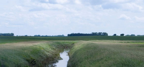 The banks have held and the buffer strips on either side have kept both the field and the drainage ditch in good condition.