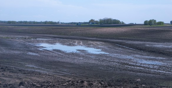 "Common to many ares around the prairie are ""ghosts"" of the old prairie potholes — wetlands — that perhaps should not have been drained."