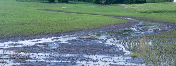 Where's the grass? Tons of soils have washed off fields where rills and gullies were created by heavy rains and moisture.