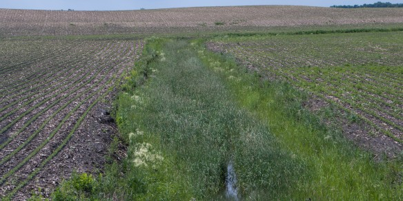 "Shallow water ""escape routes"" are cut in fields that won't technically qualify as a drainage ditch, therefore not mandated for buffer strips."
