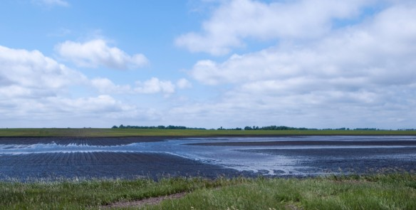 Though temporarily fill, drained wetlands like this one no longer allows for a recharging of the prairie aquifers.