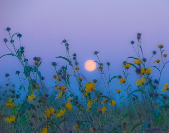 Harvest moon over our prairie now seems like a harbinger of the change in weather.