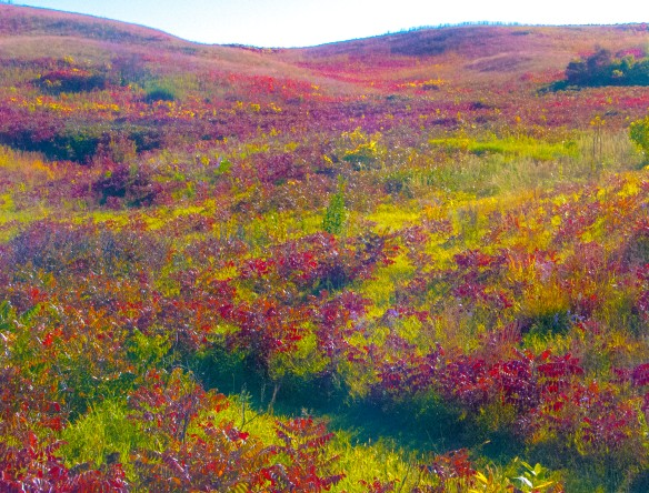 The hills at Glacial Lakes State Park are rife with the fall color of sumac.