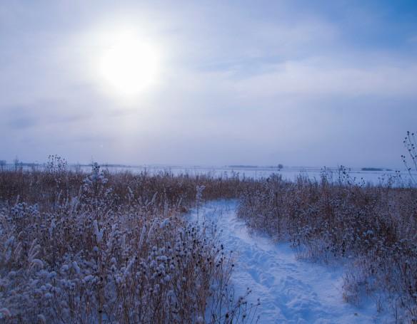 Rebecca's path cut through our prairie the day before the blizzard.