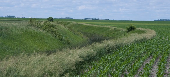 Crops planted right to the lips of drainage ditches are not legal and rarely enforced, prompting the Ag Commissioner to suggest repealing the law.