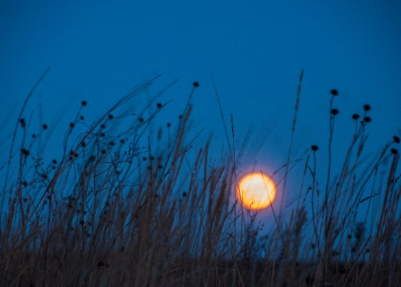 Though lacking the drama of the full moon image of a year ago, this one was much less expensive!