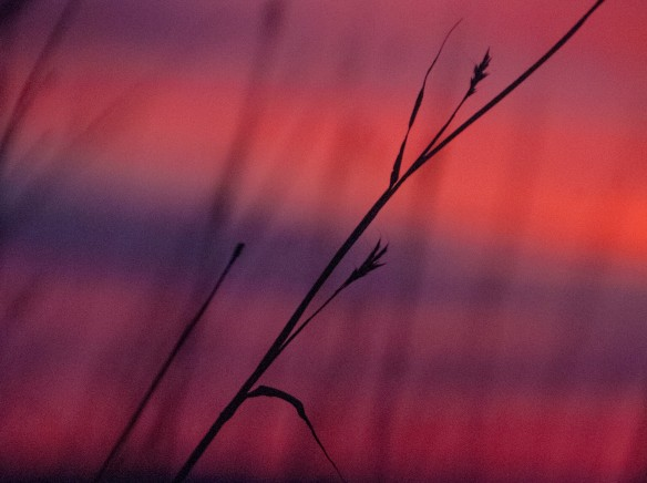 Another image from the Steen WMA, with bluestem in the sunrise.