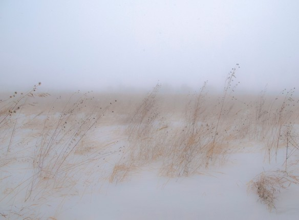 Winds whipped the prairie yesterday in gusts of up to 50 mph, but there was prairie grasses to protect the soils.