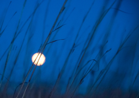 Moon is peaking through the bluestem in this photo from a year ago.
