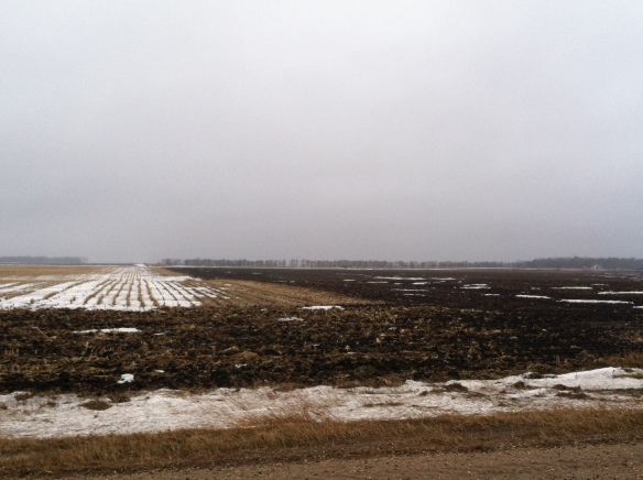 A couple of fields down the road from us during a brief thaw a couple of weeks ago.
