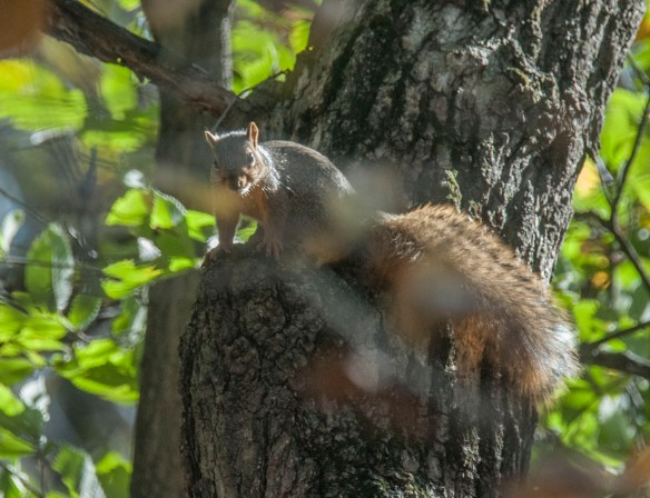 The squirrel came down to check out the intruder.