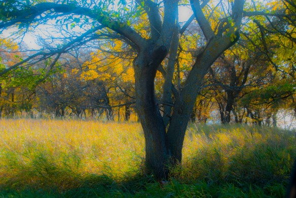 Nearby, a pastoral scene of autumn.