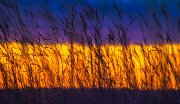 You have the big bluestem, and you have the layers of light, earth and sky. You have prairie.