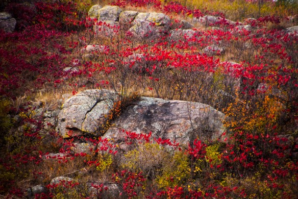 Outcrops in Autumn Red