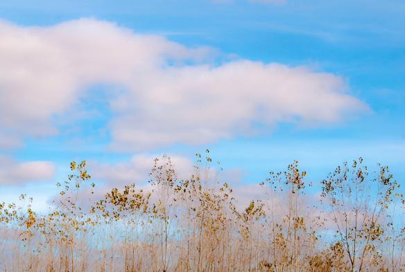 Poplar Treetops