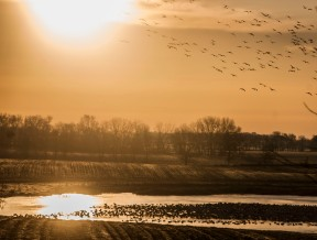 March - at a wetland over the hill from our home prairie.