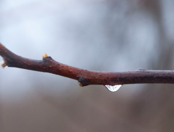 2-20-17-raindrops10