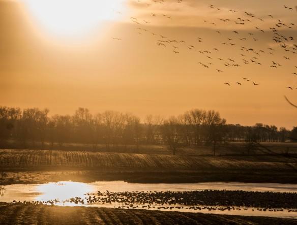 3-27-15-wetland2