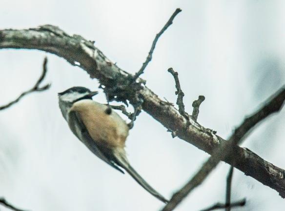 12.13.15 bird10a