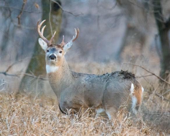 12.18.2017 deer7