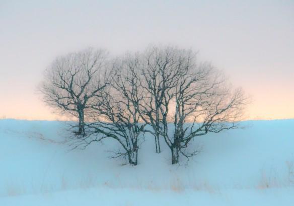 3.23.2019 trees1 copy