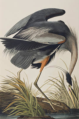 6-great-blue-heron-john-james-audubon