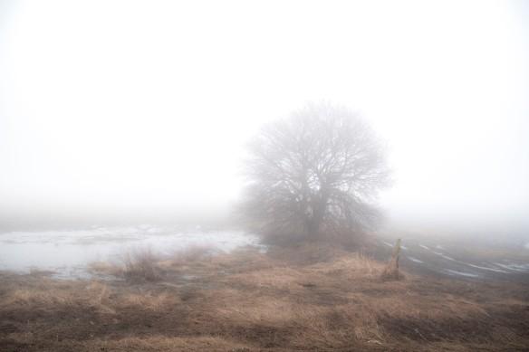 4.7.2020 foggy2